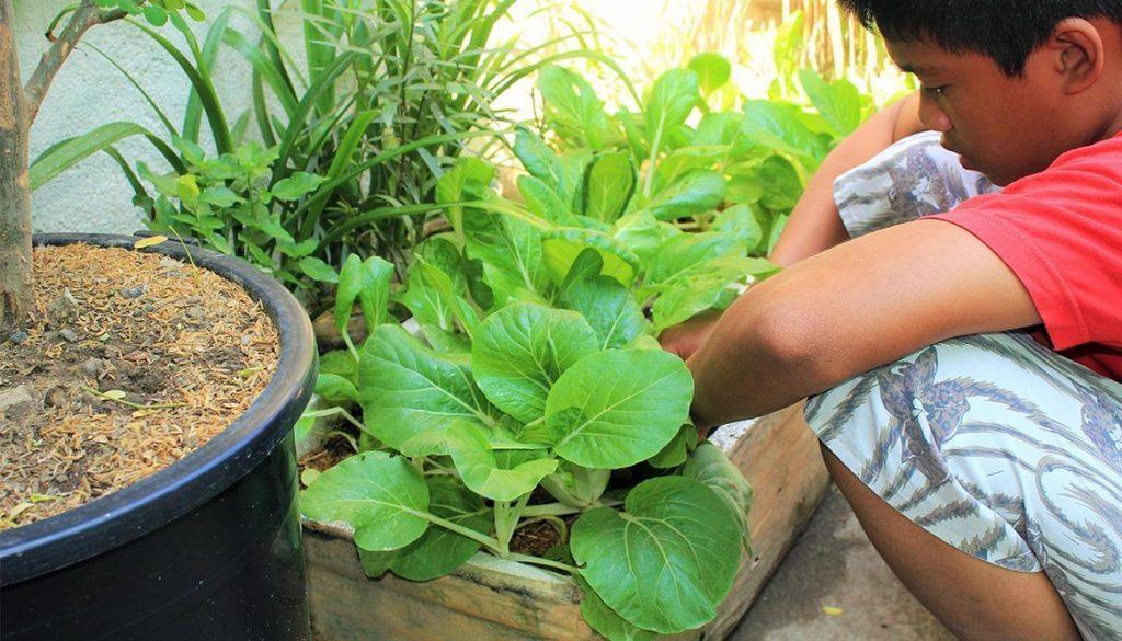 Organic Urban Container Gardening
